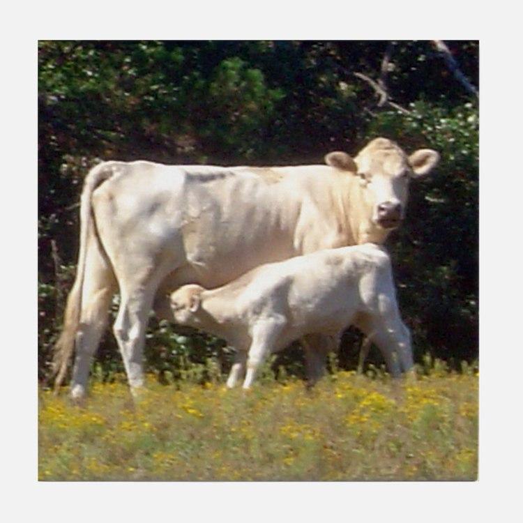 cow and calf Tile Coaster