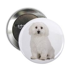 "The Perfect Bichon Frise 2.25"" Button (10 pack)"