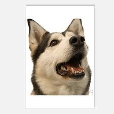 The Alaskan Husky Postcards (Package of 8)