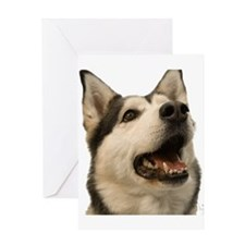 The Alaskan Husky Greeting Card