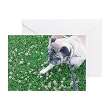 Pug In a Field Blank Greeting Cards (Pk of 10)