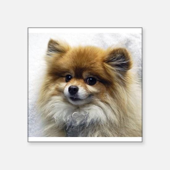 Pomeranian Cutie Sticker