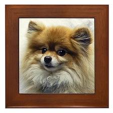 Pomeranian Cutie Framed Tile