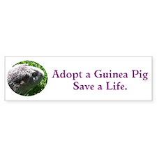 Adopt a Guinea Pig Bumper Bumper Sticker