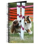 Shetland Sheepdog Agility Journal