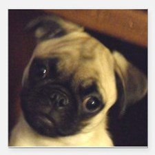 """Adorable fawn pug puppy face Square Car Magnet 3"""""""