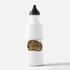 Mojave Rattlesnake Water Bottle