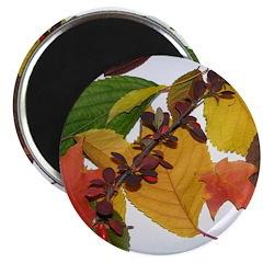 Autumn Leaves by Celeste Sheffey Magnet