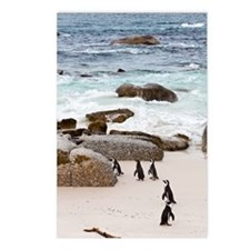 Black-footed African Peng Postcards (Package of 8)