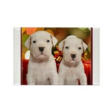 Christmas Argentine Dogos Rectangle Magnet (100 pa