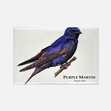 Purple Martin Rectangle Magnet