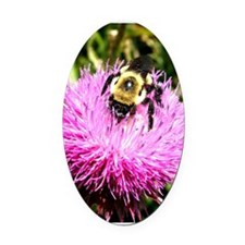 Bumble bee on Magenta Thistle Flower Oval Car Magn