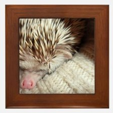 .prickly hedgie in a sleeve. Framed Tile