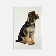 German Shepherd! Rectangle Magnet (10 pack)