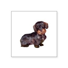 "Wire Haired Dachshund (#1)q Square Sticker 3"" x 3"""