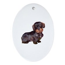 Wire Haired Dachshund (#1)q Ornament (Oval)