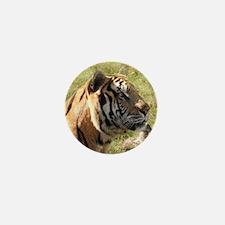 Tiger Snorkle 3 Mini Button