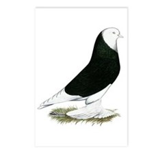 West of England Black Bald Pigeon Postcards (Packa