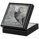 Bighorn Ram Keepsake Box