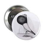 Starwitzer Pouter Pigeon 2.25