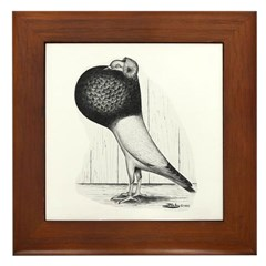 Starwitzer Pouter Pigeon Framed Tile