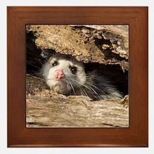 Opossum Framed Tile