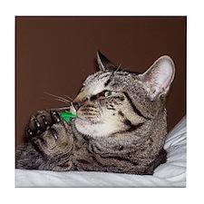 Tabby Cat IV Tile Coaster