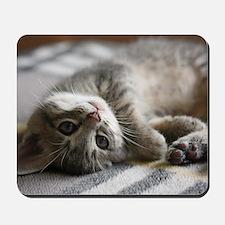 Lying kitten Mousepad