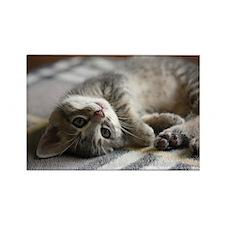 Lying kitten Rectangle Magnet (100 pack)
