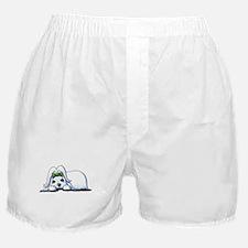 Precious Maltese Boxer Shorts