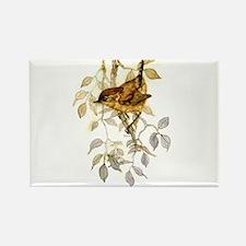 Wren Peter Bere Design Rectangle Magnet