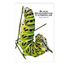 Black Swallowtail Caterpillar Postcards (Package o