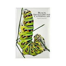Black Swallowtail Caterpillar Rectangle Magnet