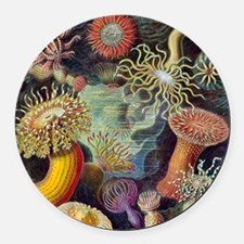 sea anemones-sq Round Car Magnet