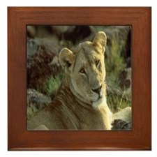 Cute Animals lions Framed Tile