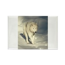 """""""Baci, The Famous Arctic Wolf"""" Rectangle Magnet"""