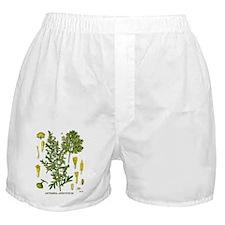 Artemesia Absinthium Boxer Shorts