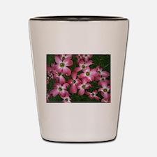 Pretty Pink Dogwood Flowers Shot Glass