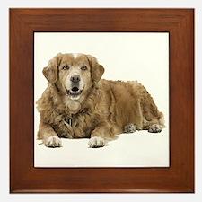 Golden Retriever Framed Tile