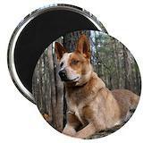 Australian cattle dog Magnets