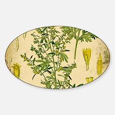 Absinthe Botanical Illustration Decal