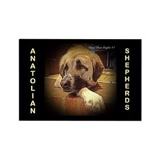 Anatolian Shepherd, Pensive Paw Rectangle Magnet