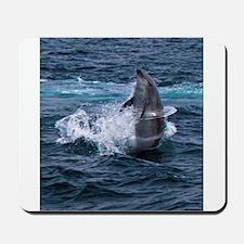 Hula-hoop Dolphin Mousepad