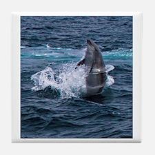Hula-hoop Dolphin Tile Coaster