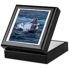 Hula-hoop Dolphin Keepsake Box