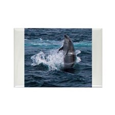 Hula-hoop Dolphin Rectangle Magnet