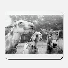 Love Me Some Donkeys Mousepad