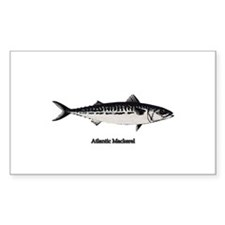 Atlantic Mackerel Decal