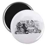 Poker Playing Cats Magnet
