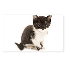 Cute Tuxedo Kitten Decal